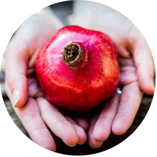 Two hands holding a pomegranate