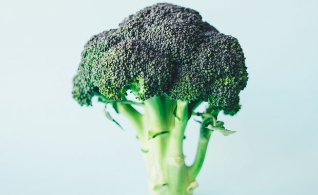 Head of broccoli on pale background, is this the fourth macronutrient?