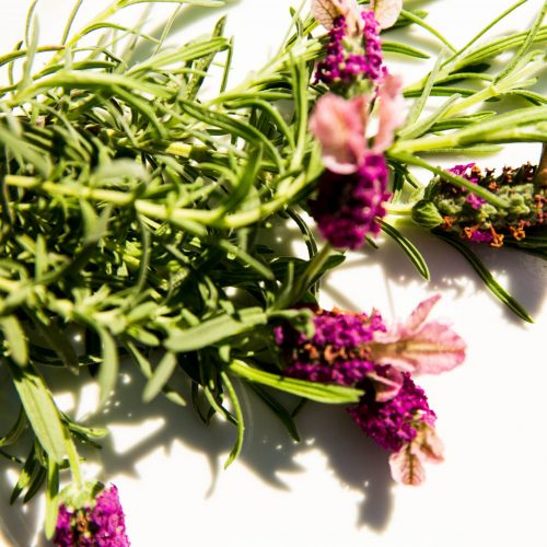 A bunch of fresh lavender, used in herbal medicine for stress management.